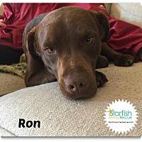 Adopt A Pet :: Ron - Plainfield, IL