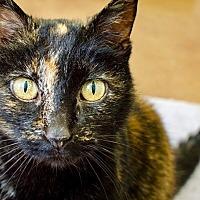 Adopt A Pet :: Lila - Novato, CA