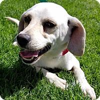 Adopt A Pet :: Jayda - Los Angeles, CA
