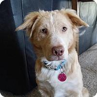 Adopt A Pet :: Sasha - Salem, OR