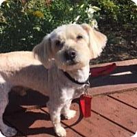 Adopt A Pet :: Shadow - El Cajon, CA