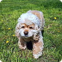 Adopt A Pet :: Bear - Creston, BC