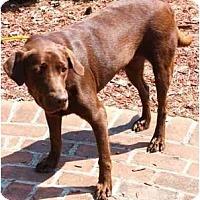 Adopt A Pet :: Brandi - Toronto/Etobicoke/GTA, ON