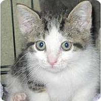 Adopt A Pet :: Braxton - Catasauqua, PA