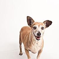 Adopt A Pet :: Ruth - Monrovia, CA