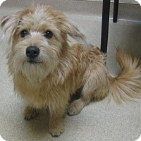 Adopt A Pet :: Pinky - Gary, IN