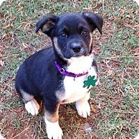 Adopt A Pet :: JC - Alpharetta, GA