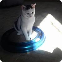 Adopt A Pet :: Queen Cleopatra - McDonough, GA