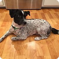 Adopt A Pet :: Daisy - Salem, NH