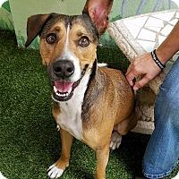 Adopt A Pet :: Picasso - Ft. Lauderdale, FL