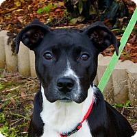 Adopt A Pet :: Toby - Valley Stream, NY