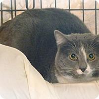 Adopt A Pet :: Potter - Monterey, VA