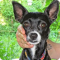 Adopt A Pet :: Pepper - Mount Kisco, NY