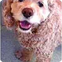 Adopt A Pet :: Bailey - Tacoma, WA
