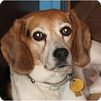 Adopt A Pet :: Shiloh - Adopted - Blairstown, NJ