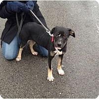 Adopt A Pet :: Cece - Chicago, IL