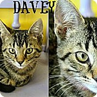 Adopt A Pet :: Davey - Mobile, AL