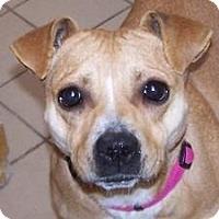 Adopt A Pet :: Mirah - Jackson, MI