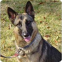 Adopt A Pet :: Annie - Pike Road, AL