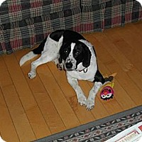 Adopt A Pet :: Scout - Douglas, ON