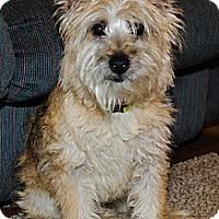 Adopt A Pet :: Sandy - Oak Creek, WI