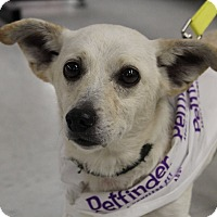 Adopt A Pet :: Rocky - Morgantown, WV
