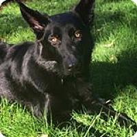 Adopt A Pet :: River*ADOPTION PENDING* - Mill Creek, WA