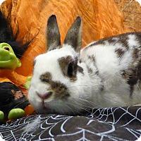 Adopt A Pet :: Henry Kissinger - Alexandria, VA