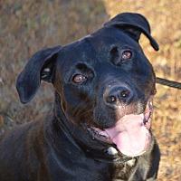 Adopt A Pet :: Gypsy - Cranston, RI