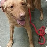 Adopt A Pet :: Suzy - Paducah, KY