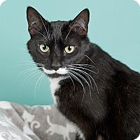 Adopt A Pet :: Mr. Kitty - Wilmington, DE