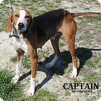 Adopt A Pet :: Captain   SOS - Elizabeth City, NC