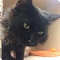 Adopt A Pet :: Kingston - Durango, CO