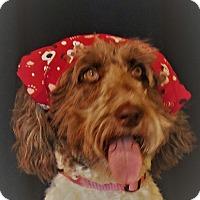 Adopt A Pet :: Arrabella - LaGrange, KY