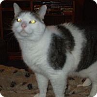 Adopt A Pet :: Boy Kid - Richland, MI