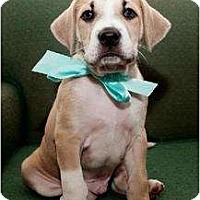 Adopt A Pet :: Kale - Rochester, NY