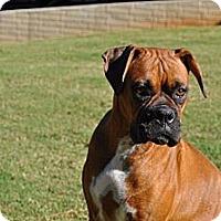 Adopt A Pet :: Roxy - Albany, NY