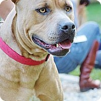 Adopt A Pet :: Penny - Reisterstown, MD