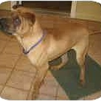 Adopt A Pet :: Henry - Bethesda, MD