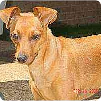 Adopt A Pet :: Sophie - Swiftwater, PA