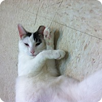 Adopt A Pet :: Rub-a-Dub - Trevose, PA