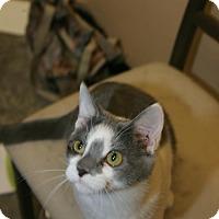 Adopt A Pet :: Frenchy Fry - Capshaw, AL