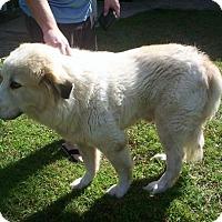 Adopt A Pet :: Hamish - Kyle, TX