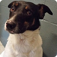 Adopt A Pet :: Daisy - Grants Pass, OR