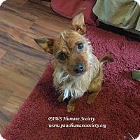 Adopt A Pet :: Max-A-Million - Killeen, TX
