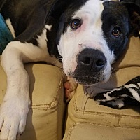 Adopt A Pet :: Alexa - Jasper, GA