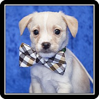Adopt A Pet :: Tucker - San Diego, CA