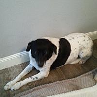 Adopt A Pet :: Babs - Dothan, AL
