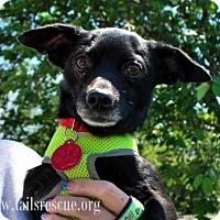 Adopt A Pet :: Timothy *Tripod* - Maple Grove, MN