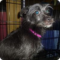 Adopt A Pet :: Raven - Glastonbury, CT